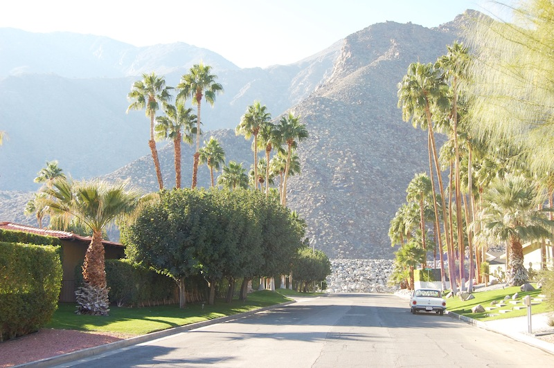 Design oasis in palm springs for Palm springs landscape design