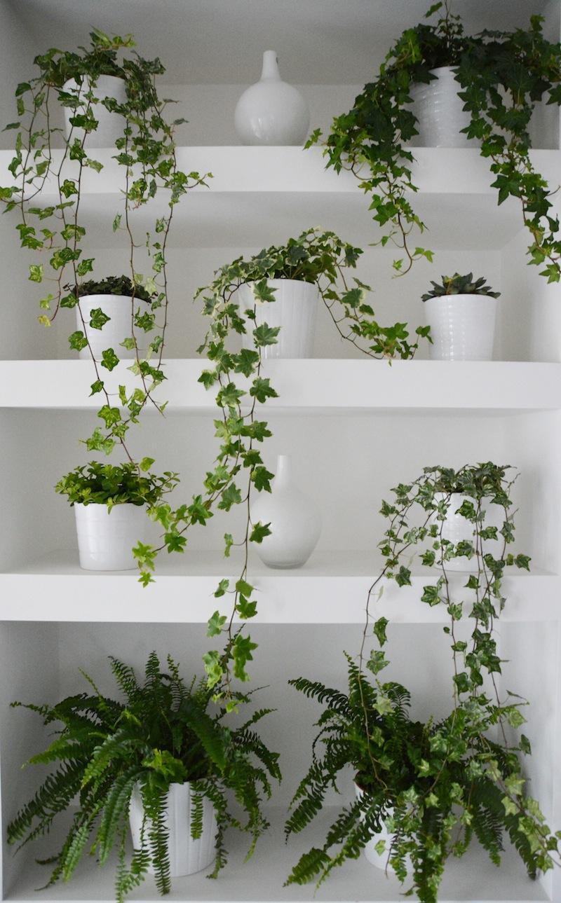 green wall 4