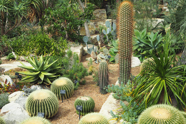 Kew Garden Cacti