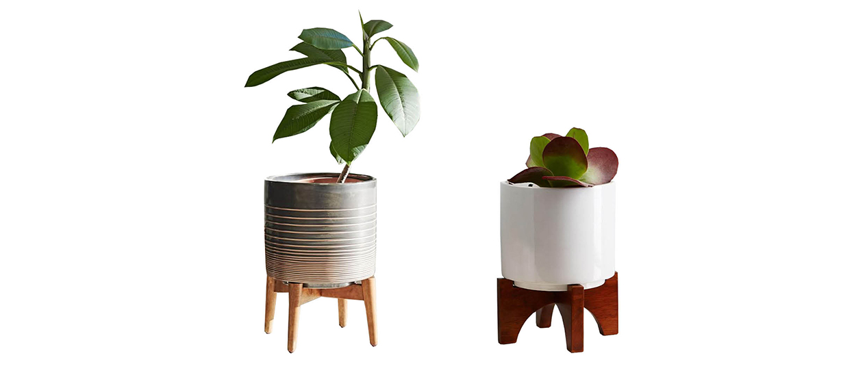 chic interior style plants